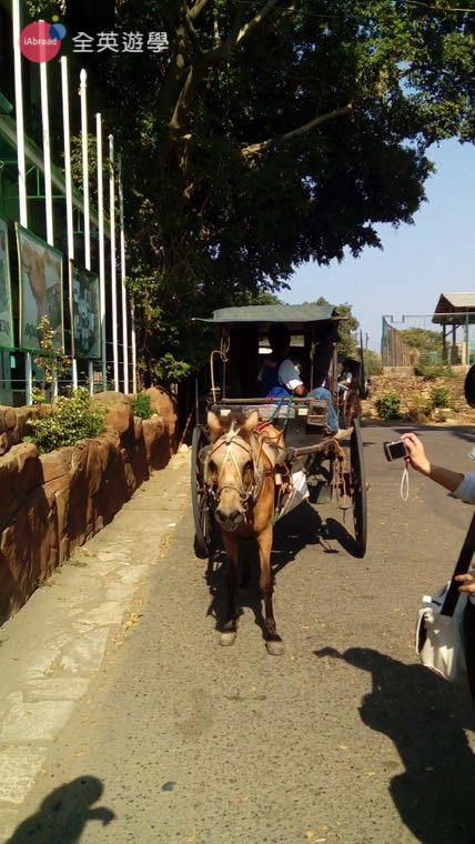 ▲ Vigan 小鎮還有觀光馬車可以坐,會帶遊客繞舊市區一圈,欣賞沿街的西班牙建築