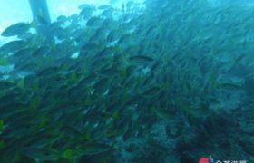 《English Fella 語言學校》週末活動,Nalusuan Island 跳島浮淺,海中滿滿的魚!