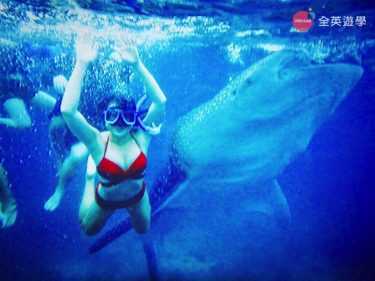 ▲ Oslob 第一次與鯨鯊游泳,感覺很新鮮!
