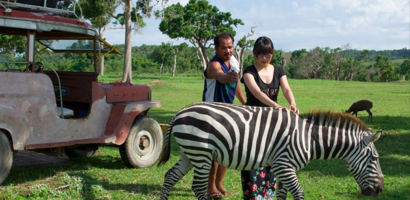 """[照片故事] 馬達加斯加的斑馬""""馬蹄"""" 就在我眼前!噠噠~噠噠噠~AFRO"""