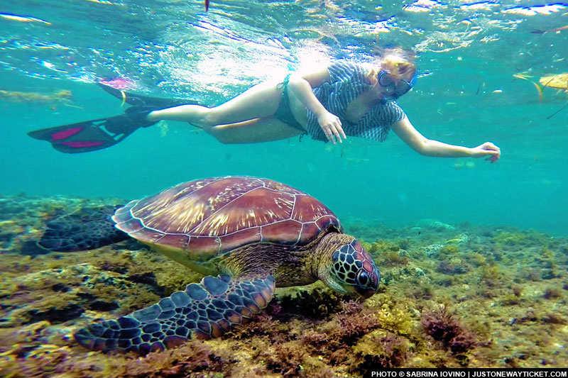 菲律賓有許多國際級的知名淺水地點,Apo 是歐美背包客必來的景點之一 Snorkel with the turtles in Apo Island