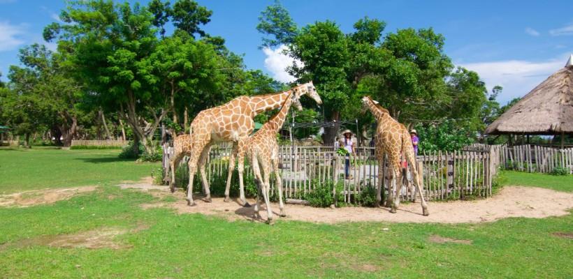 [照片故事] 菲律賓的侏羅紀公園!咿哈~享受馳騁非洲大草原的快感!