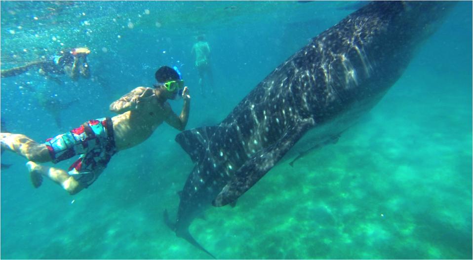 澳洲打工度假+菲律賓遊學達人彎彎_菲律賓與鯨鯊游泳 Oslob