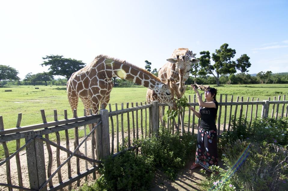 菲律賓遊學_科隆 Coron Calauit 卡拉威動物園