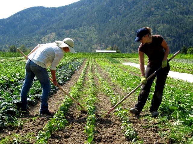 ▲ Farm hand 農場助手:農場工作人員的總稱,澳洲的工作來源大宗,例如:picker 採收人員、 packer 包裝人員