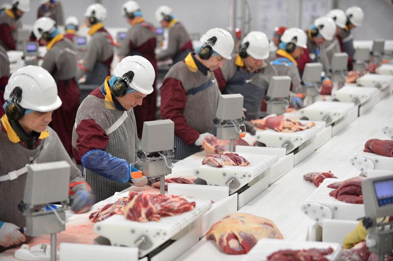 ▲ Slicer 肉工廠刀手,手部需要大量運動十分辛苦。如果你是男生,力氣夠大又不怕血腥,刀手是一項很適合嘗試的工作,因為工作的內容造成競爭性小,加上肉廠工時穩定且薪水較行情高,當然,這樣的工作相對需要較有經驗又不怕血腥的老手。