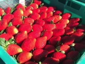 3分鐘懂!澳洲草莓農場實用英文&工作職稱🍓~打工度假背包客必看!卡布丘我來了!