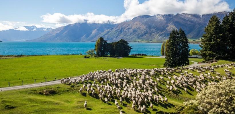 Mini半年菲律賓遊學心得Part 3:【菲律賓VS.紐西蘭遊學】比較分析懶人包